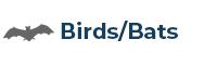 Birds / Bats
