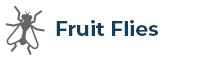 Fruit Flys