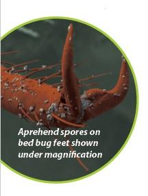 Bed Bug Spores Aprehend